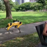 "Robot köpek Spot'a verilen ""sosyal mesafe"" görevi [Video]"